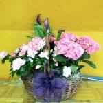 multi plant basket