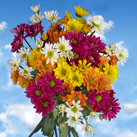 daisies come in a variety of different colors.