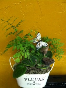 Cute mix of African violet and maidenhair fern in a French inspired tin accented by pods and butterfly.